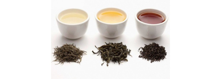 Comment choisir et préparer votre thé